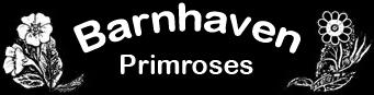 Barnhaven Primroses