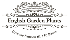 English Garden Plants